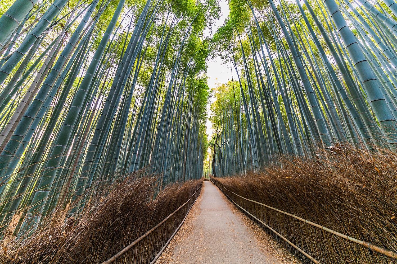 Arashiyama Bamboo Grove - Kyoto, Japan