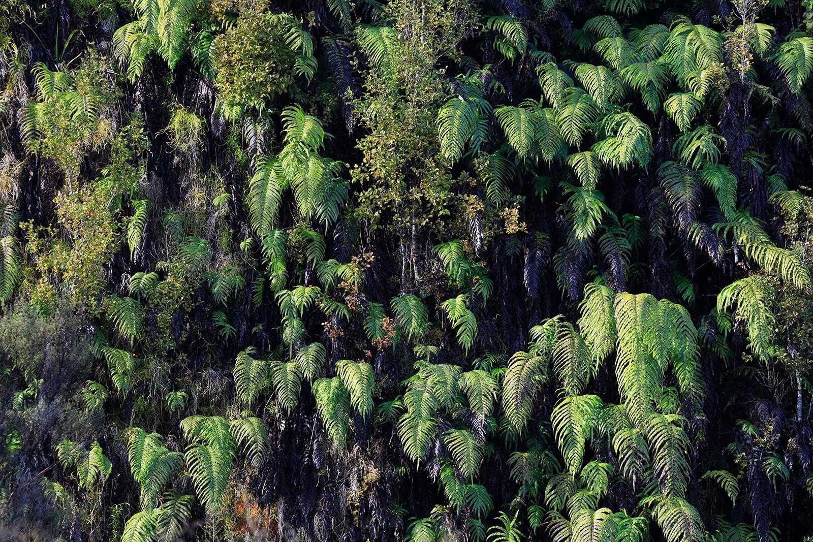 Lake Matheson - South Westland, New Zealand