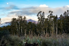 Haast - South Westland, New Zealand