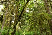 Rockport State Park - Washington, USA