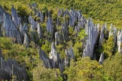 The Pinnacles - Gunung Mulu National Park, Sarawak, Borneo