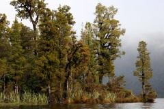 Okarito - South Westland, New Zealand