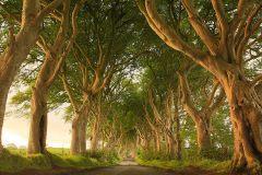 The Dark Hedges - County Antrim, Northern Ireland